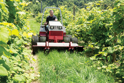 Ventrac 4500 Mowing High Grass - The Tough Cut Mower is perfect for places such as vineyards because its ability to cut everything from overgrown grass to saplings while reducing flying material that damages nearby vines and plants.
