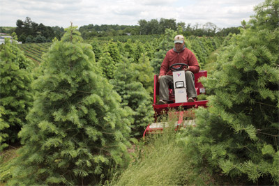 Field Mower perfect for Tree Farms - Seen here also is the tree shield which protects the operator in close quarters.